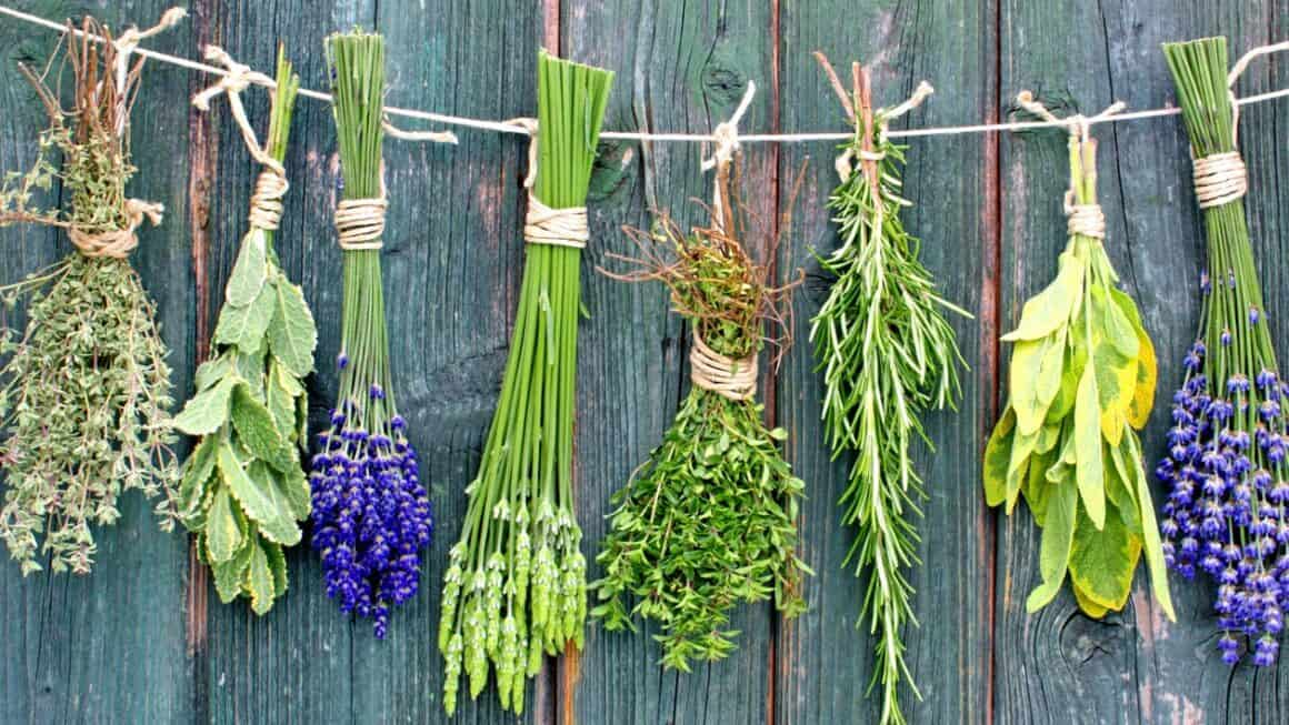 The magic of nature: These medicinal herbs are really worth a try