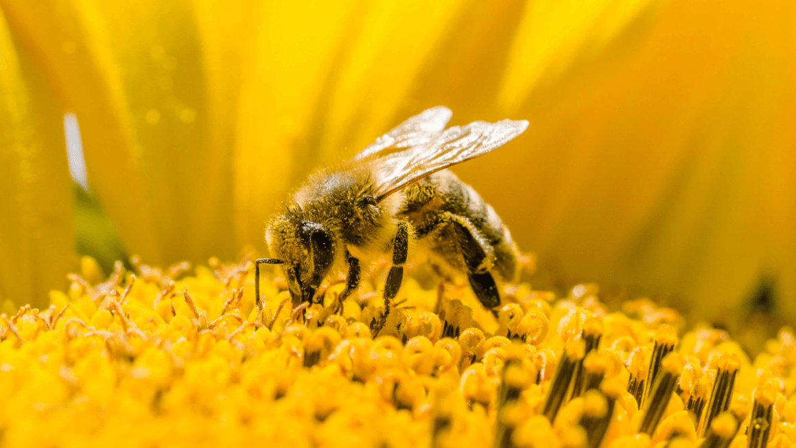 HOW TO GET RID OF BEES AND HIVES