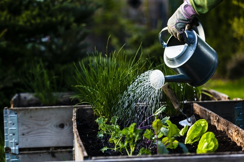 7 Types of Plants That Can Enhance the Look of Your Garden!!