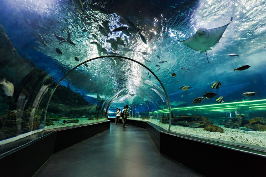 Frequently Asked Questions About Dubai Aquarium & Underwater Zoo
