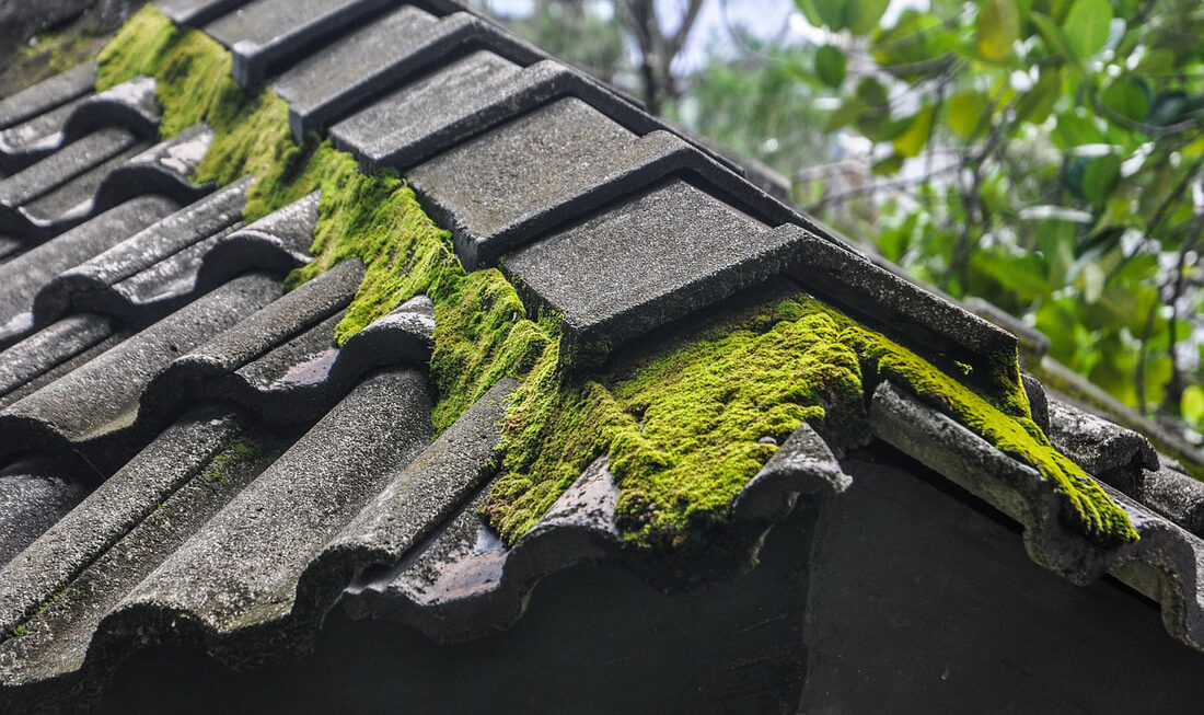 Professional Level Quality Services for Moss Removal