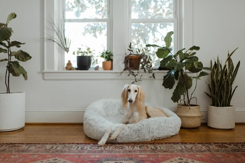 Buying advice: How to find the right dog bed