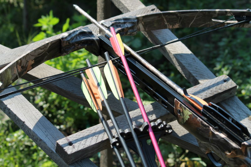 Compound or Recurve Bow? Pros and Cons to Help You Decide