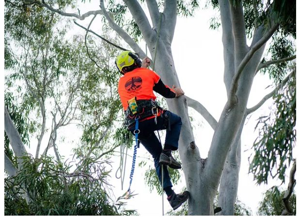 7 THINGS TO LOOK IN A PROFESSIONAL TREE SERVICES